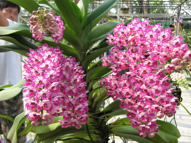 The Blooms Orchid Park Ratchaburi406