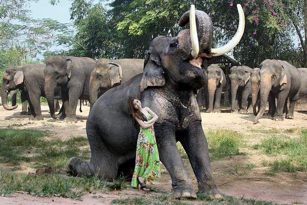 White elephant, Damnoen Saduak307